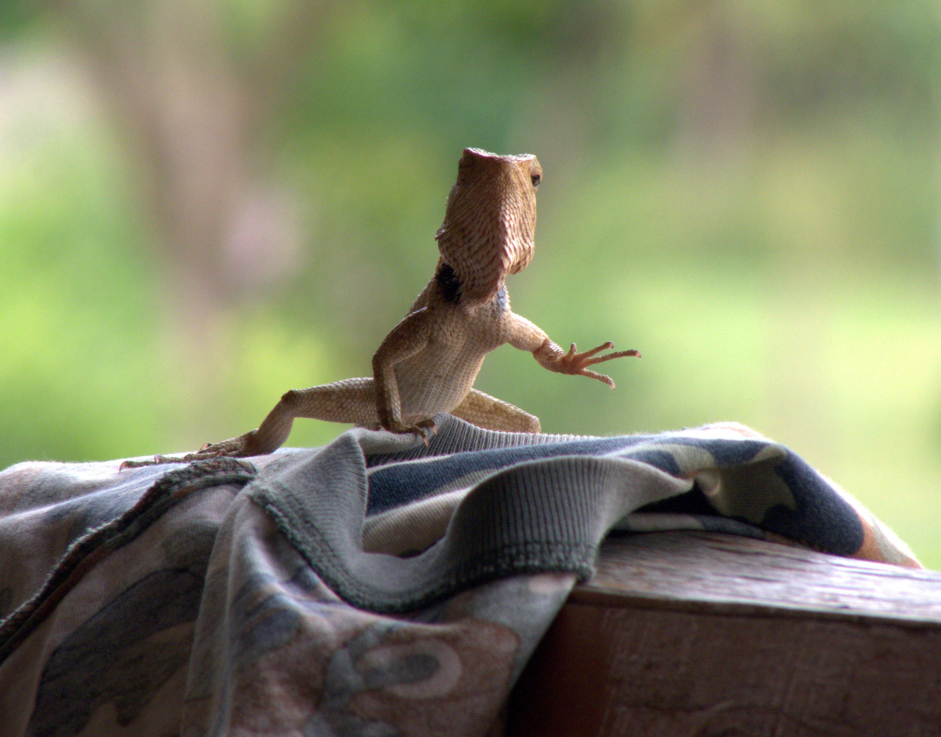 Top 5 Tips To Get Rid Of Lizards At Home