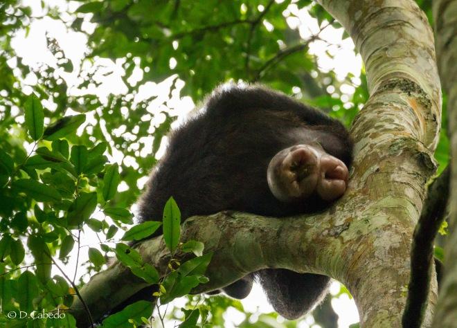 kibale np  chimpanzees in the wild  u2013 a birder u00b4s blog